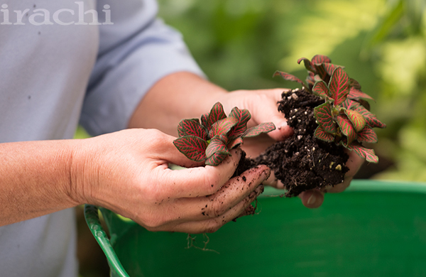 کاشت گیاه تراریوم مرحله پنجم
