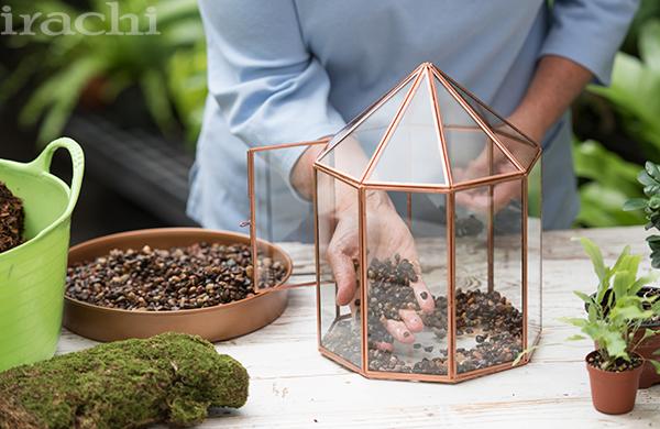 کاشت گیاه تراریوم مرحله دوم